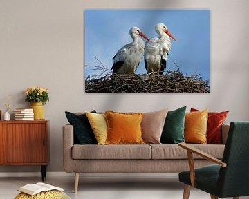Couple de cigognes sur leur nid sur Beschermingswerk voor aan uw muur