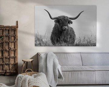Dromerige Schotse Hooglander in zwart -wit van Ans Bastiaanssen