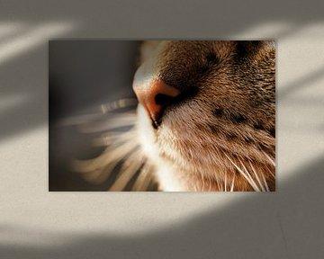 Katze von Toni Stauche