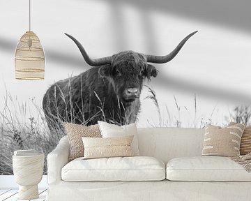 Schotse Hooglander in zwart wit van Ans Bastiaanssen