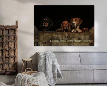 Drie honden kijken over de rand van een houten staldeur van Caroline van der Vecht