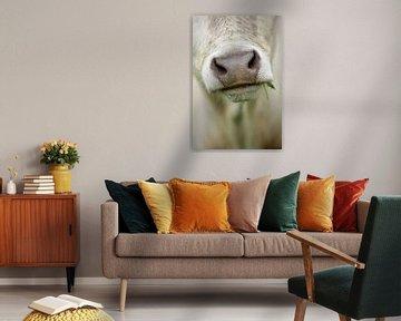 Museau d'une vache avec un brin d'herbe dans le coin de la bouche sur Caroline van der Vecht