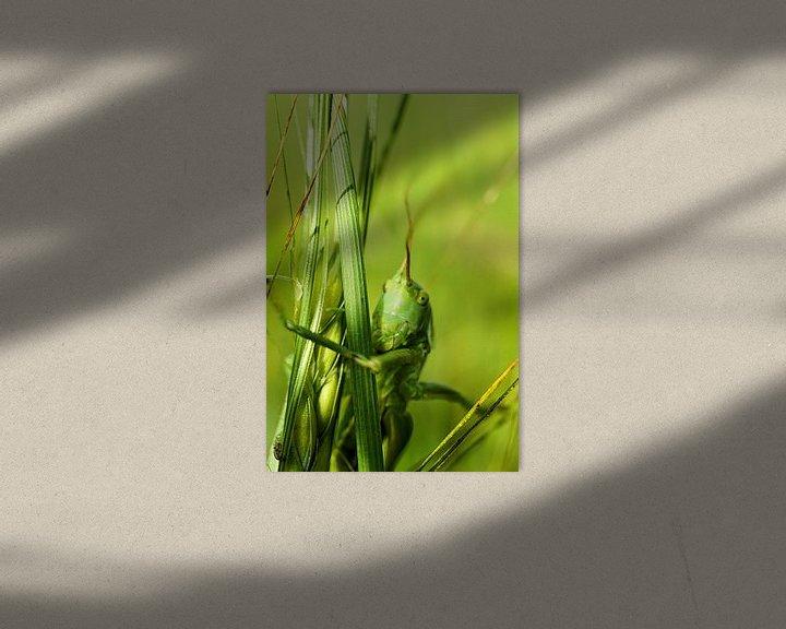 Beispiel: Grashüpfer von Toni Stauche