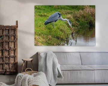 Blaureiher sieht seinen Prooj von Merijn Loch