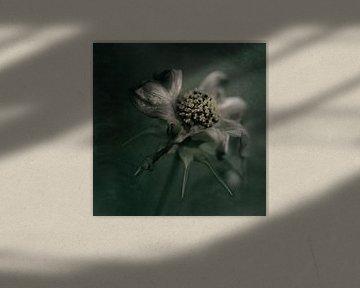 moody flower van Saskia Schotanus