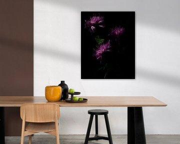 violette Blumen von Saskia Schotanus