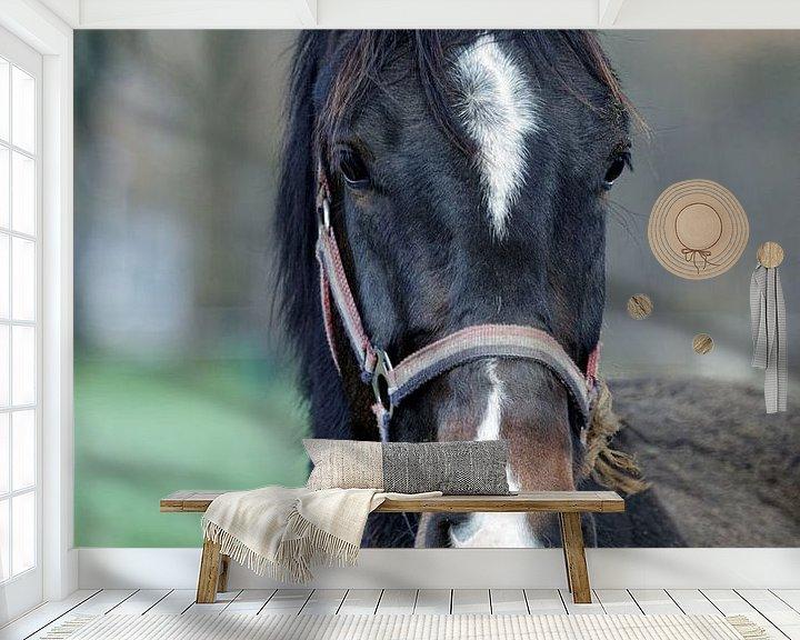 Impression: Le cheval noir sur Anjo ten Kate