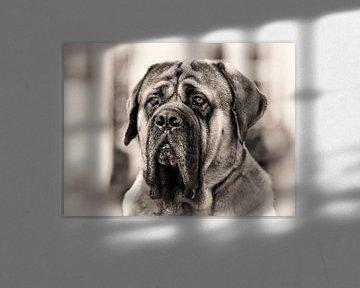 Porträt eines Hundes. von Rob Boon