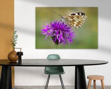 Dambord vlinder op vlokbloem van Daniela Beyer