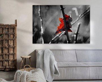 Dornenzweig mit einem Herbstblatt von Toni Stauche