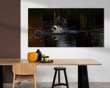 Unterwasser-Ente von joyce kool