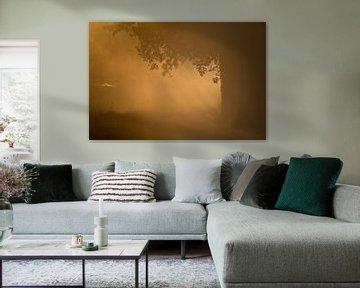 Eerste ochtend licht door de mist van Marcel Kerkhof