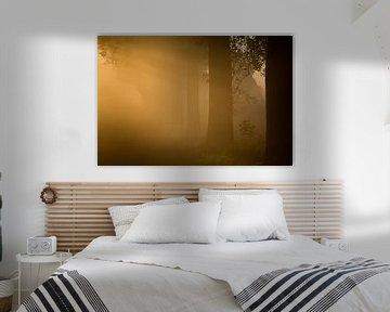 Eerste ochtend licht door de mist sur Marcel Kerkhof