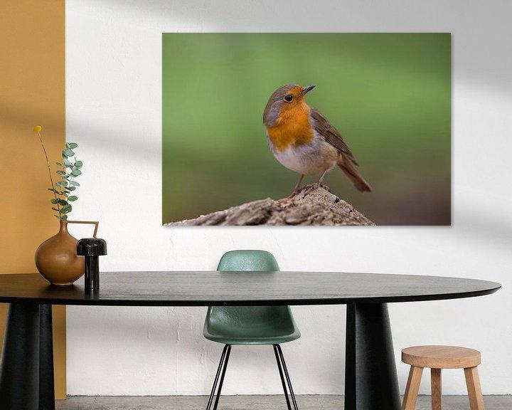 Impression: Robin sur Jan Jongejan