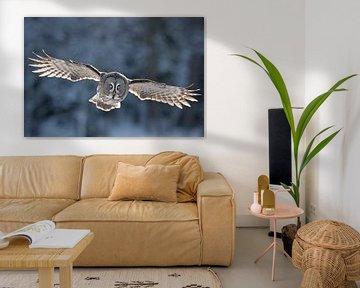Vliegende Laplanduil (Strix nebulosa) van Beschermingswerk voor aan uw muur