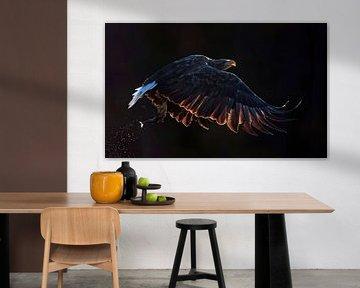 Vliegende  Zeearend (Haliaeetus albicilla) van Beschermingswerk voor aan uw muur