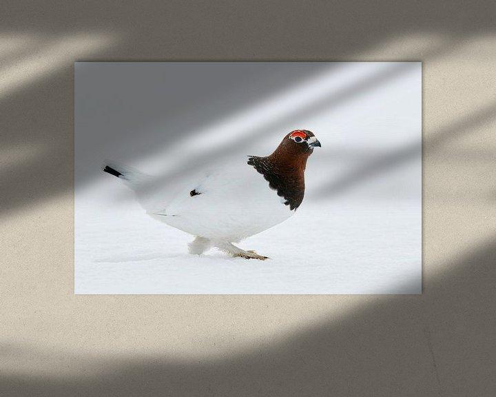 Sfeerimpressie: Moerassneeuwhoen (Lagopus lagopus) van Beschermingswerk voor aan uw muur