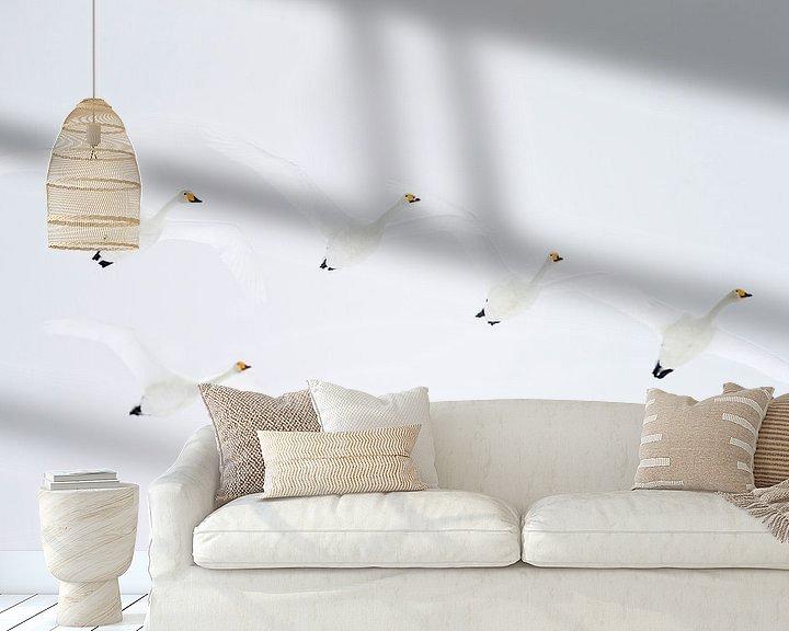 Sfeerimpressie behang: Wilde Zwanen (Cygnus cygnus) van Beschermingswerk voor aan uw muur