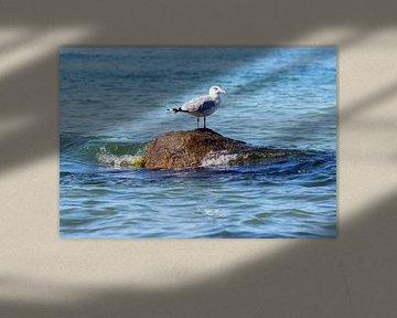Eine Möwe auf einem Stein im Meer