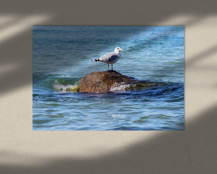 Sfeerimpressie: Een zeemeeuw op een rots in de zee van Frank Herrmann