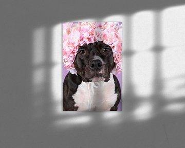 Porträt eines amerikanischen Stafford-Terriers sitzend mit Blumenhut auf dem Kopf in fliederfarbenem von Leoniek van der Vliet
