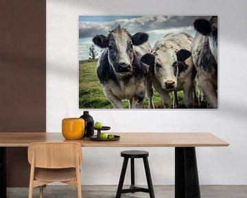 Two Curious Shaggy Cows von Urban Photo Lab