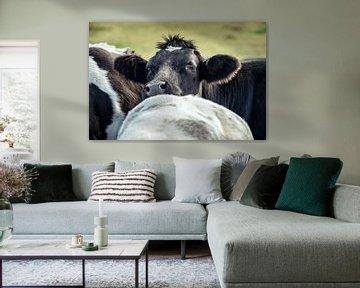 Cow Getting Noticed I'm Here! von Urban Photo Lab