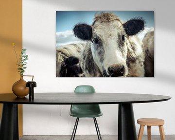 Sweet Looking Shaggy Cow von Urban Photo Lab