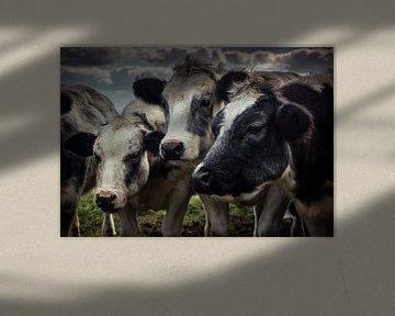 Cows Huddled Close Together von Urban Photo Lab