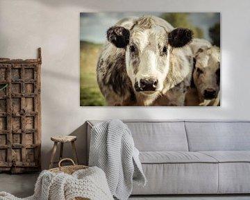 Grey And White Dairy Cow von Urban Photo Lab