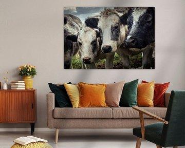 Three Cows In A Row von Urban Photo Lab
