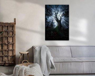 Een spookachtig ritueel - Sprookjesboom