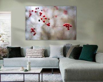 Nahaufnahme von roten Beeren gegen einen Fotoabzug mit weissem Himmel von Manja Herrebrugh - Outdoor by Manja