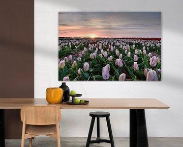 Tulpenfeld bei Sonnenuntergang von John Leeninga