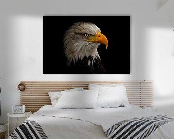 Porträt eines amerikanischen Seeadlers von Karin aan de muur
