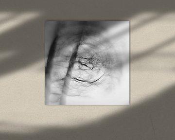 Schemen I, schwarz-weiss von Steffi Hommel