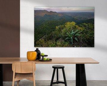 Uitzicht over het oerwoud van de Sierra del Rosario vanaf een hoog punt van Nature in Stock