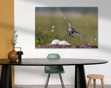 Adult Slechtvalk (Falco peregrine) van Beschermingswerk voor aan uw muur