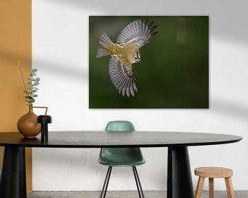Vliegende Goudhaan (Regulus regulus) van Beschermingswerk voor aan uw muur