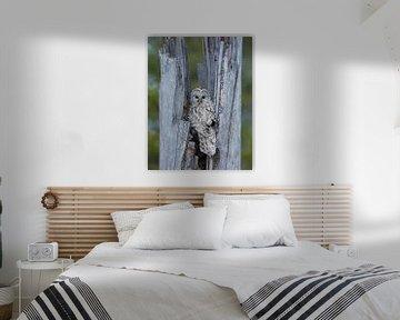 Oeraluil (Strix uralensis) van Beschermingswerk voor aan uw muur