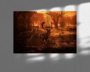 Zwei Damhirsche bei Sonnenuntergang von Albert Beukhof