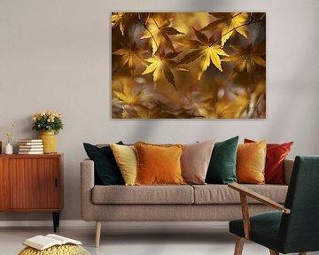 Der Herbst in seiner schönsten Form von Bert Hooijer