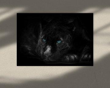 De zwarte panter van Bert Hooijer