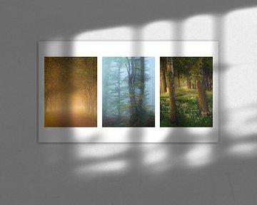 Collage aus 3 schönen Waldfotos von Jos Pannekoek