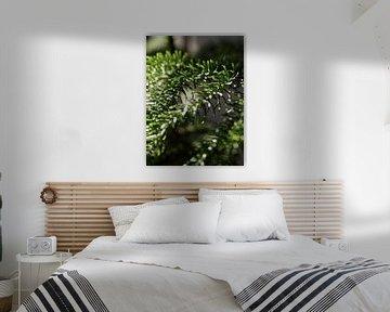Zimmer in der Morgensonne von Renate Mager