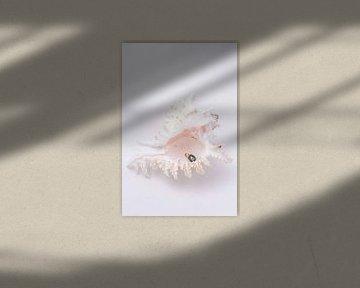 Muschel mit Perle von Rowena Timmerman
