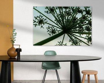 Abstraktes Heracleum von ElkeS Fotografie