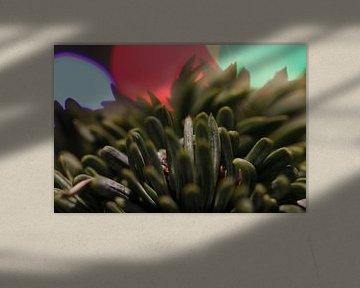 Dennennaalden met Licht van Julius Koster