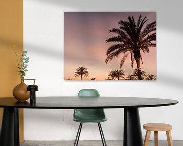 Palmen auf Ibiza bei schönem Sonnenuntergang auf Ibiza von Youri Claessens