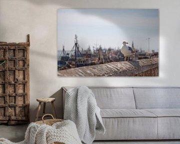 Möwe im Hafen von Essaouira (Marokko) von t.ART